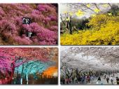 Khí hậu tại Hàn Quốc