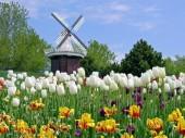 Hà Lan không chỉ có hoa tuylip và cối xay gió