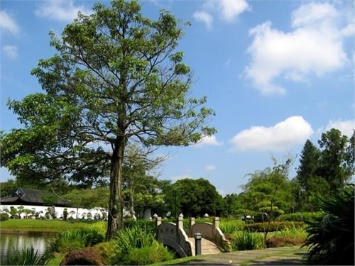Thăm vườn Trung Hoa ở Singapore