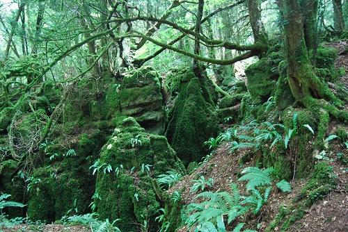 Khu rừng bí hiểm ở Anh quốc