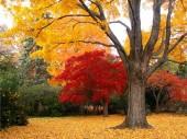 Đẹp ngây ngất mùa thu ở xứ Hàn