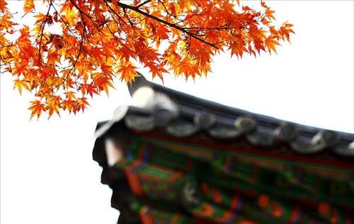 Đắm mình trong cảnh đẹp mùa thu xứ Hàn
