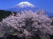 Du học Nhật – ưu tiên cấp COE cho những bạn nào có bằng năng lực tiếng Nhật từ 4 kyu trở lên