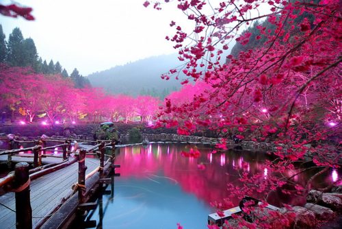https://images.nonexiste.net/popular/wp-content/uploads/2012/02/Cherry-Blossom-Lake-Sakura-Japan.jpeg