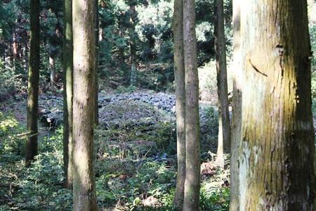 Khu mộ cổ trong rừng tùng cổ thụ
